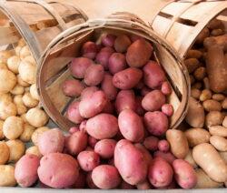 Verschiedene Kartoffeln