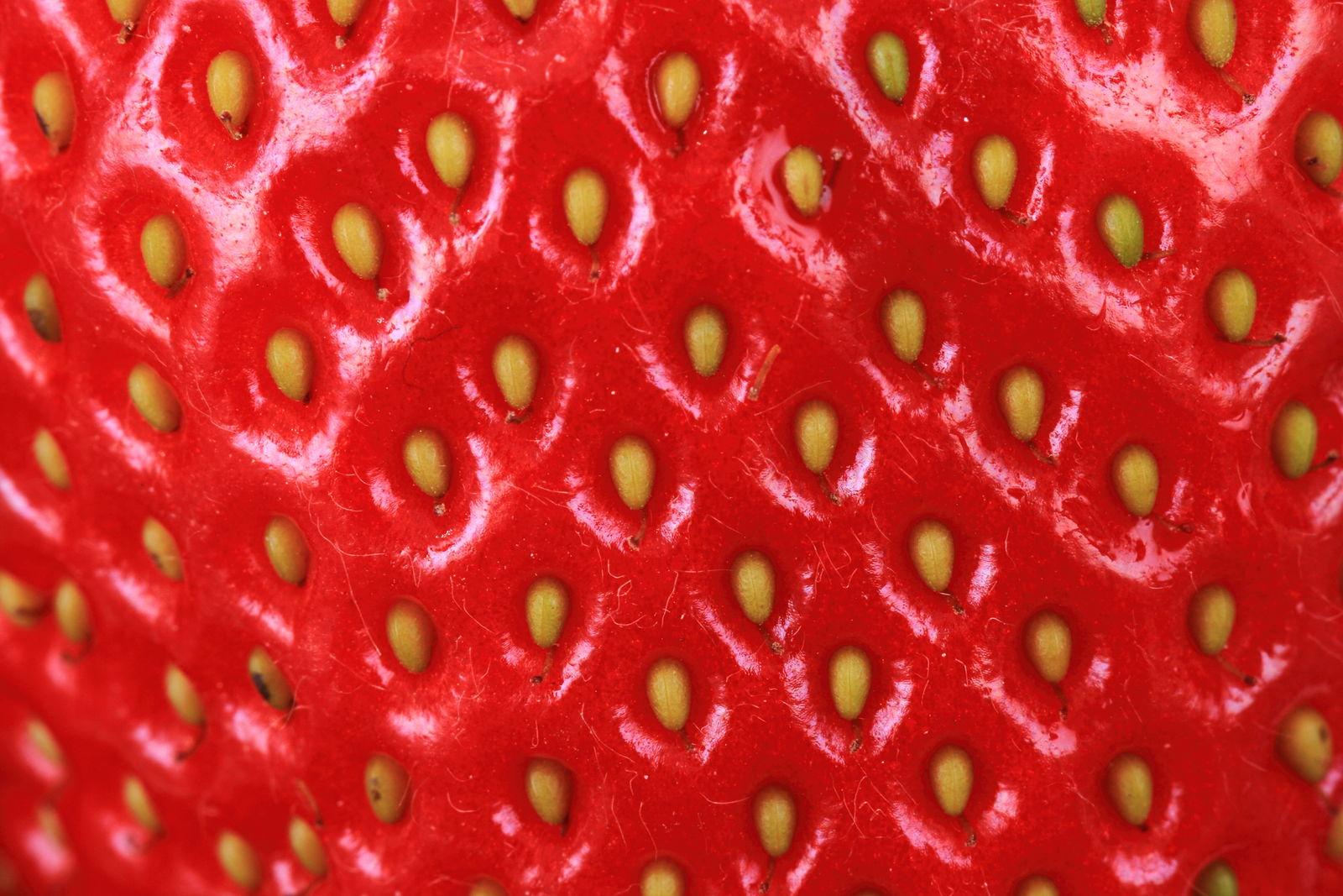 Etwas Neues genug Erdbeeren vermehren: Nüsse aussäen & Ableger vermehren - Plantura &QW_49