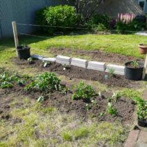 Erdbeeren Im Garten Pflanzen