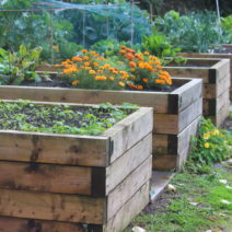 Hochbeete Aus Holz Bepflanzt