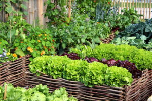Hochbeet Weidenäste Salat Kohl Gemüse