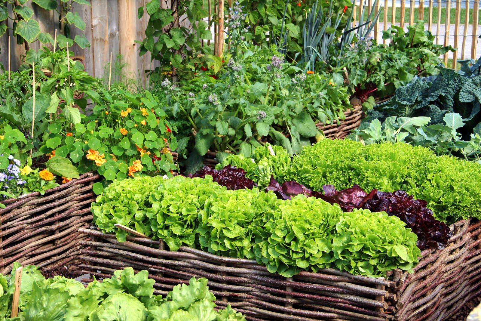 Hochbeet bepflanzen: Fruchtfolge und schädlingsvertreibende Pflanzen