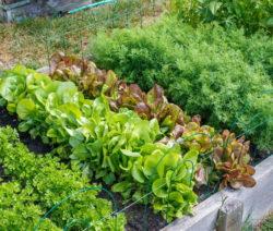 Hochbeet Aus Holz Mit Salat Und Kräuter