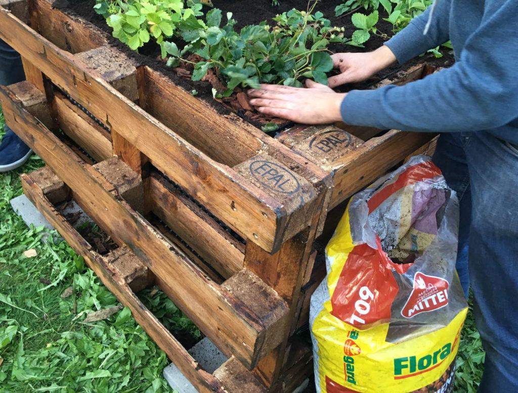 Hochbeet aus Palettn befüllen und bepflanzen