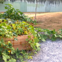 hochbeet bepflanzen pflanzplan mischkultur gr nd ngung. Black Bedroom Furniture Sets. Home Design Ideas