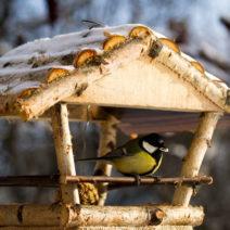 Kohlmeise An Vogelhaus