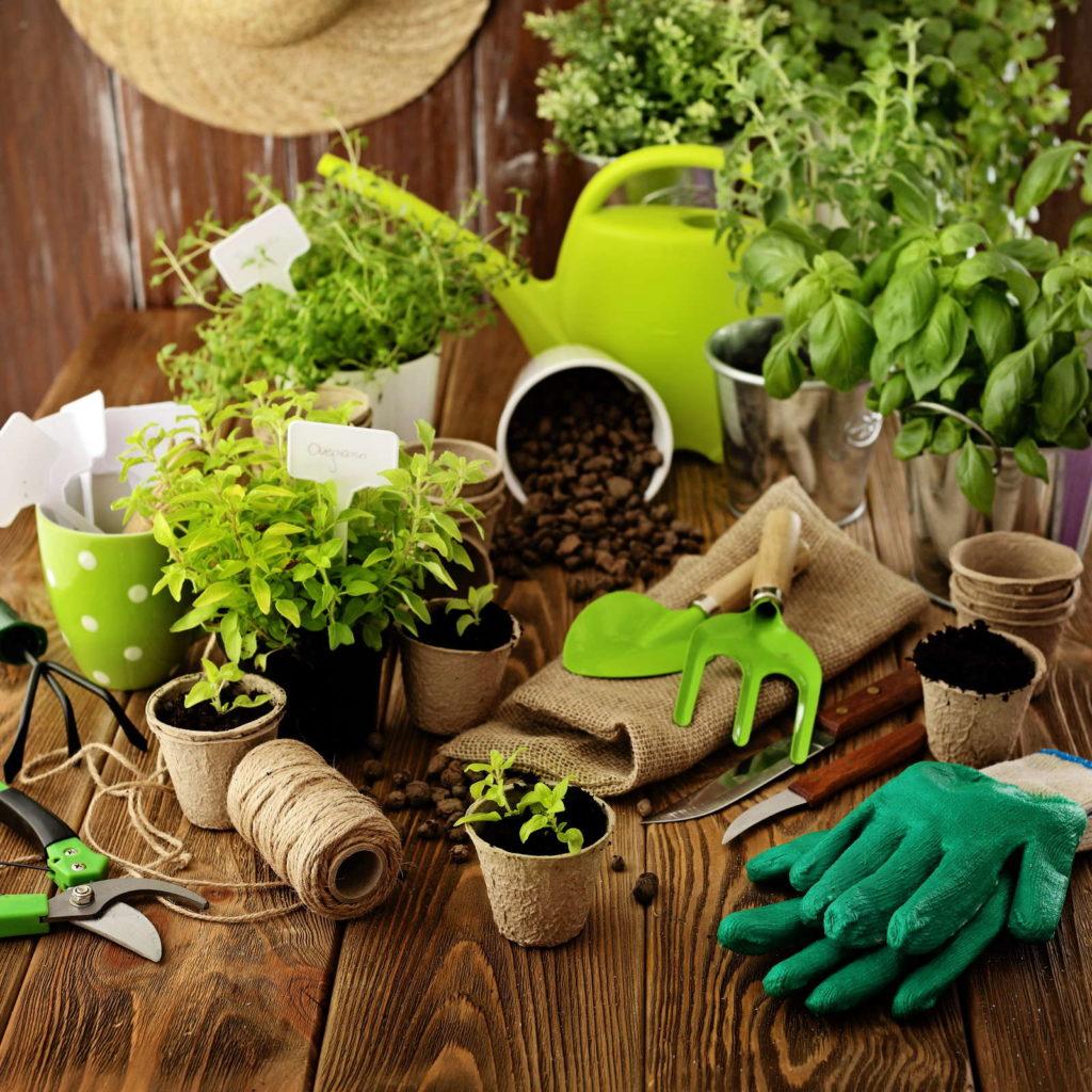 stecklinge vegetative vermehrung optimale bedingungen plantura. Black Bedroom Furniture Sets. Home Design Ideas