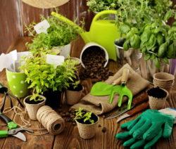 Kräuter Vermehren Kräuter In Töpfen Handschuhe Erde Gartenwerkzeug