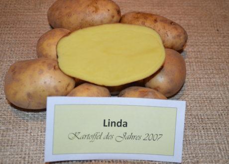 Die Kartoffelsorte Linda: Was Sie So Besonders Macht