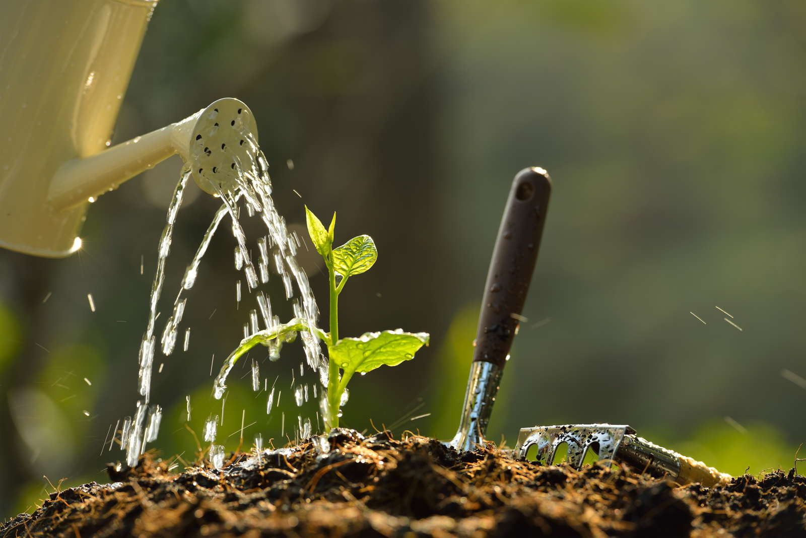 Stecklinge Vegetative Vermehrung Optimale Bedingungen Plantura
