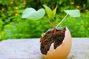 Steckling In Eierschale Pflanzen