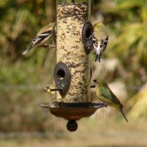 Vögel An Futtersäule
