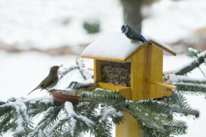 Vögel An Vogelhaus Im Winter Mit Schnee