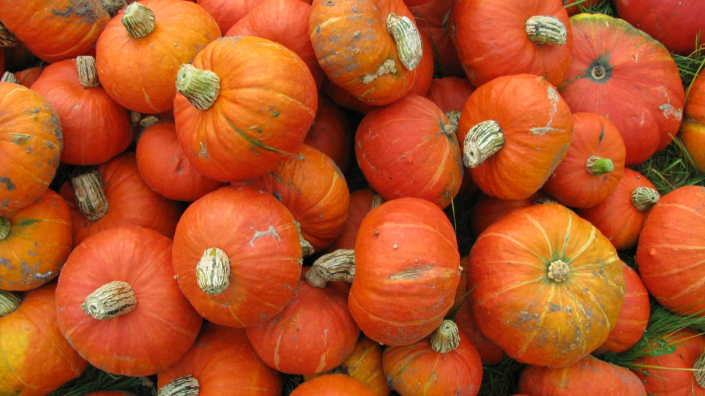 Viele Hokkaidos orange Kürbisse