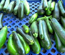 Zucchini In Kiste 1