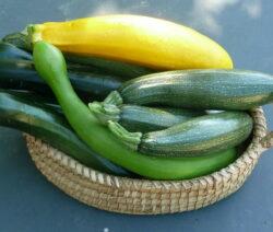 Zucchinis In Korb Grüne Und Gelbe Zucchini