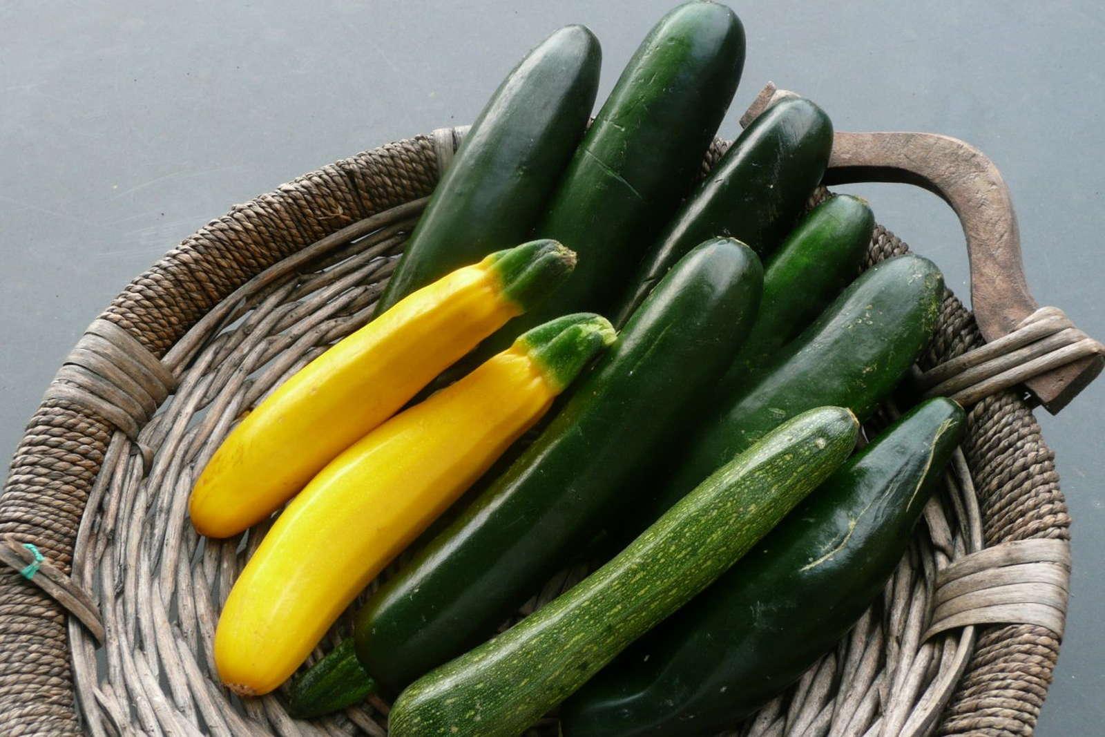 Zucchini Pflanzen