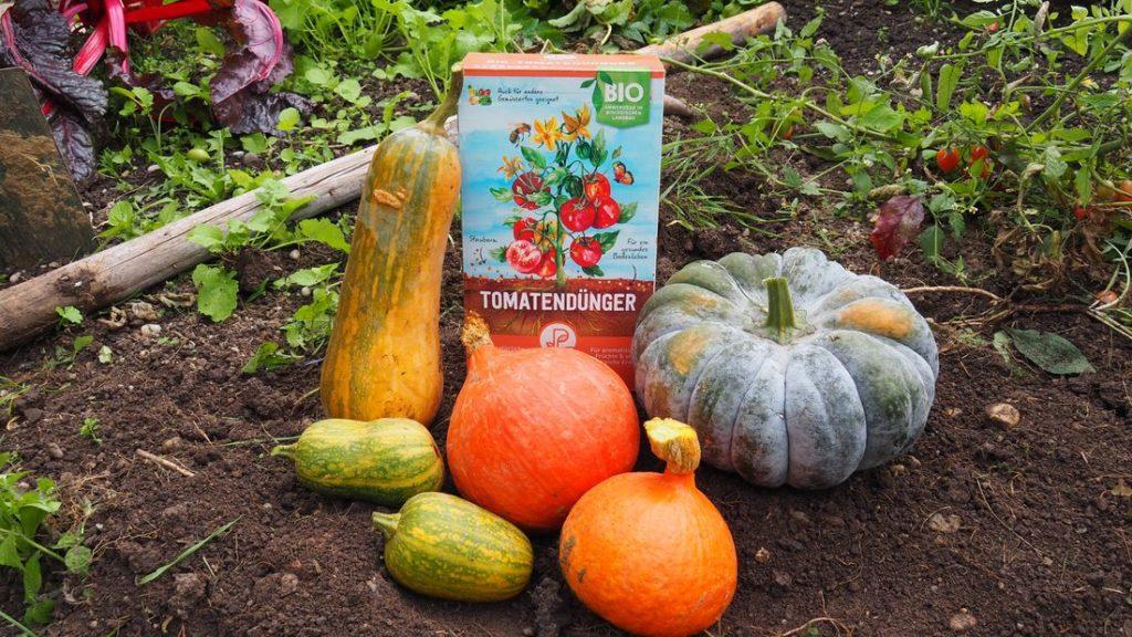 Kürbisernte mit Plantura Bio-Tomatendünger
