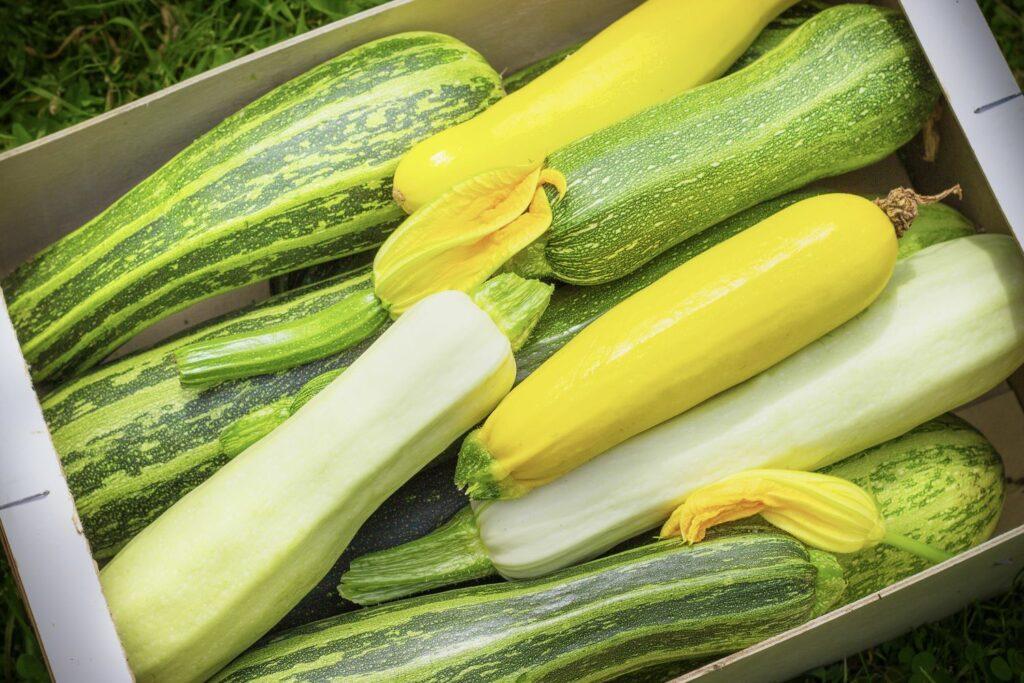 bunte Zucchini-Sorten