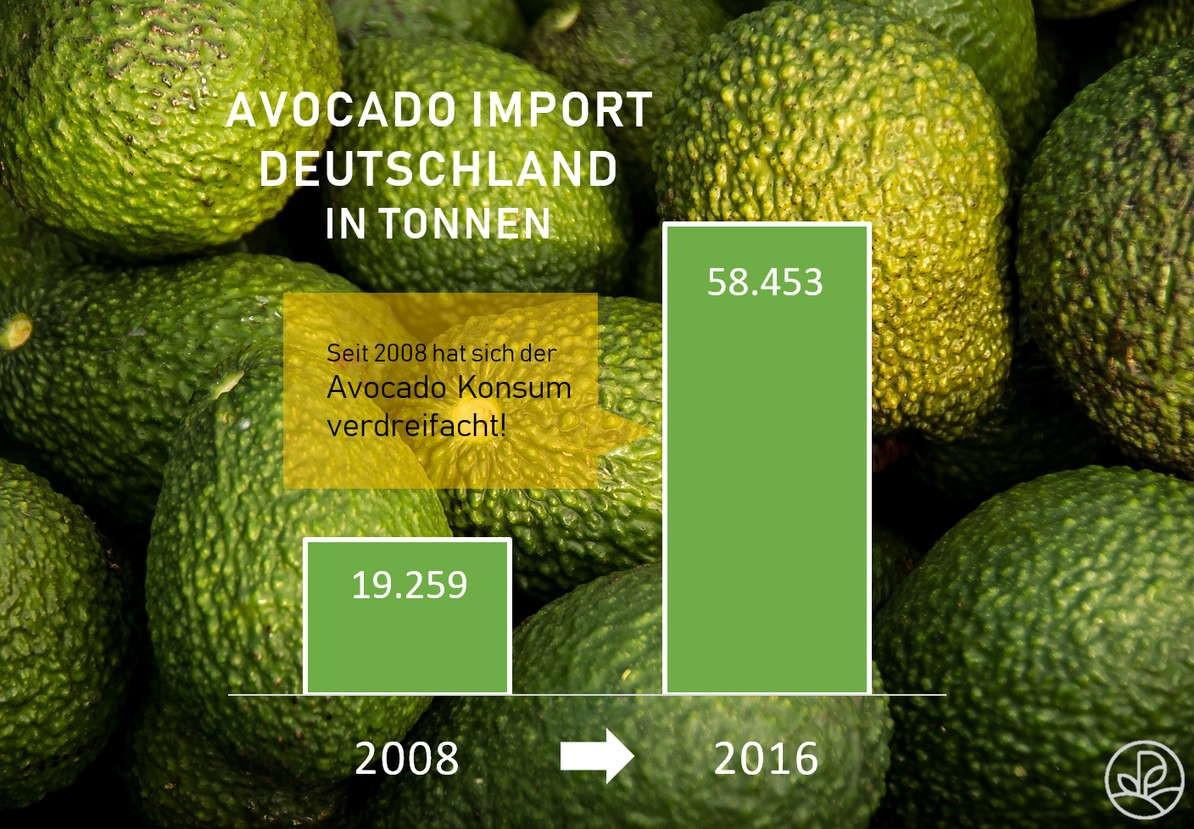Avocado Import Diagramm