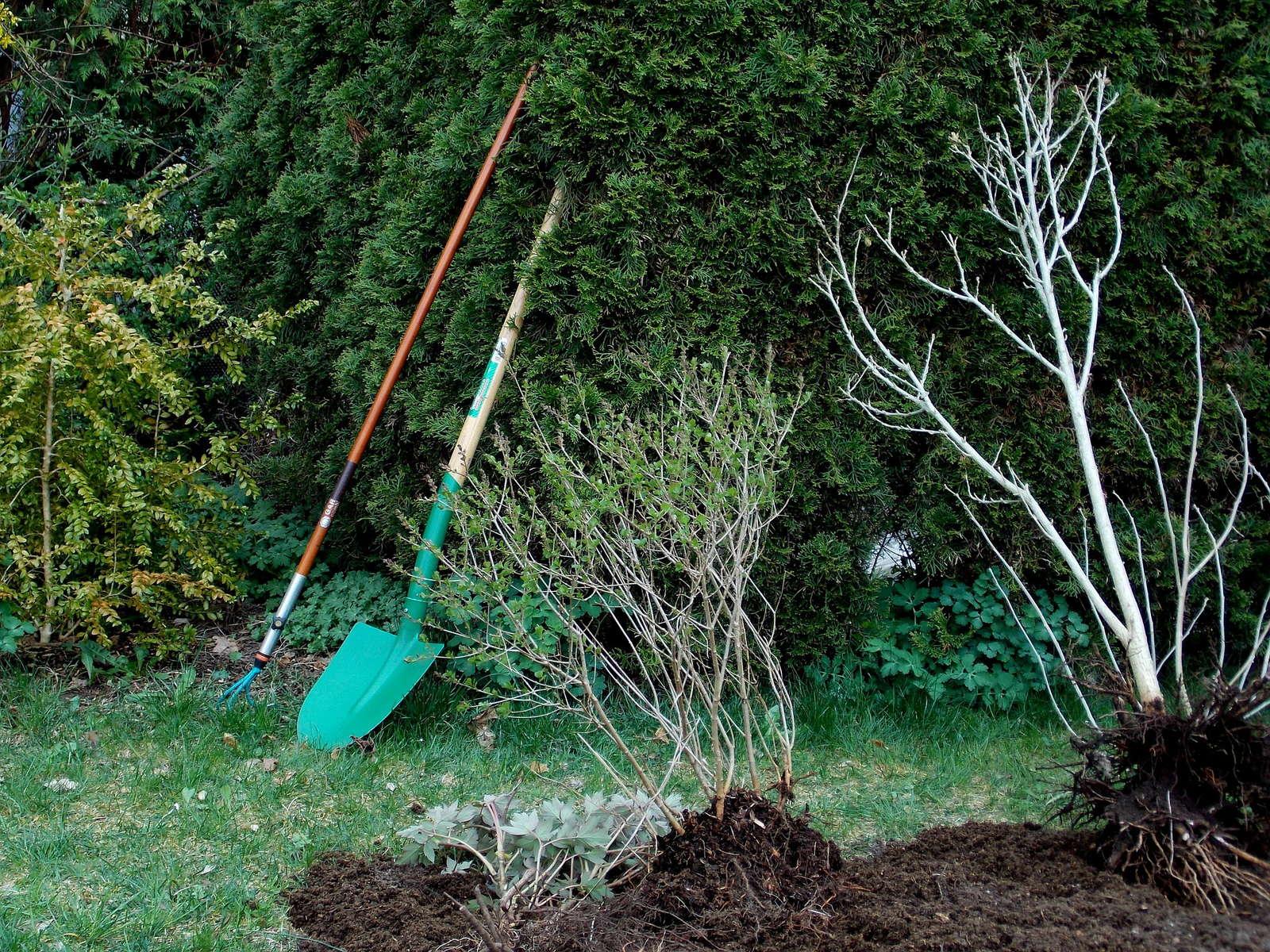Bäume Umpflanzen 5 tipps wie sie ihren garten aus dem winterschlaf holen plantura