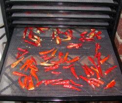 Chili Trocknen Im Ofen