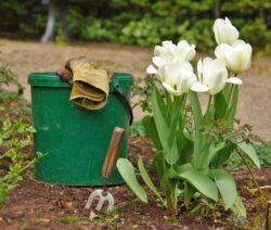 Garten Tulpe WErkzeug