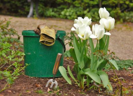 Tulpen Pflanzen: Tulpenzwiebeln Im Eigenen Garten Anbauen