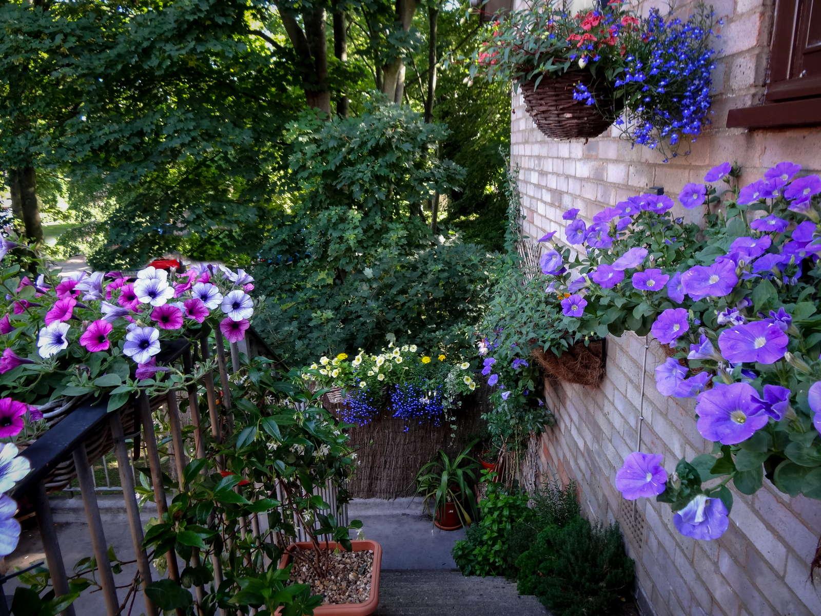 Petunien Anbauen Hangende Und Stehende Petunien Im Garten Plantura