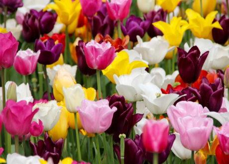 Die 5 Schönsten Frühlingsblumen