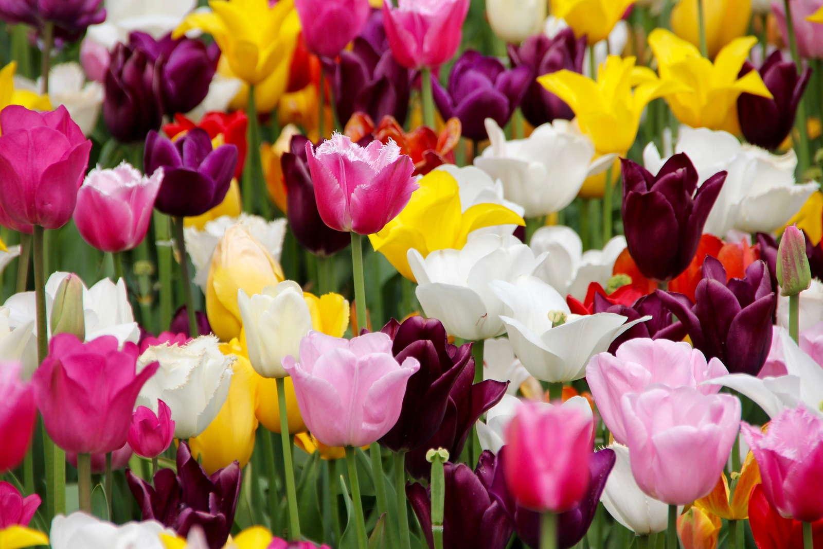 Die 5 schönsten Frühlingsblumen - Plantura