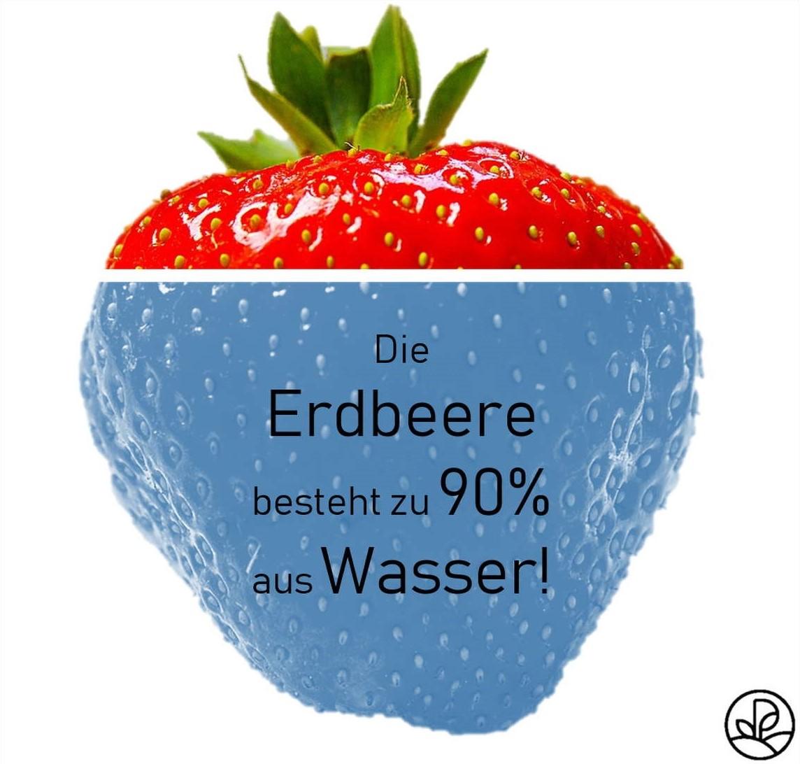 Wassergehalt Erdbeere