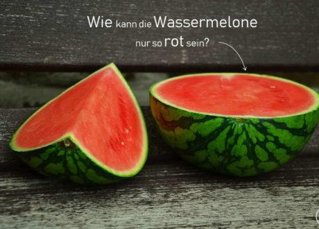 Wassermelone Info