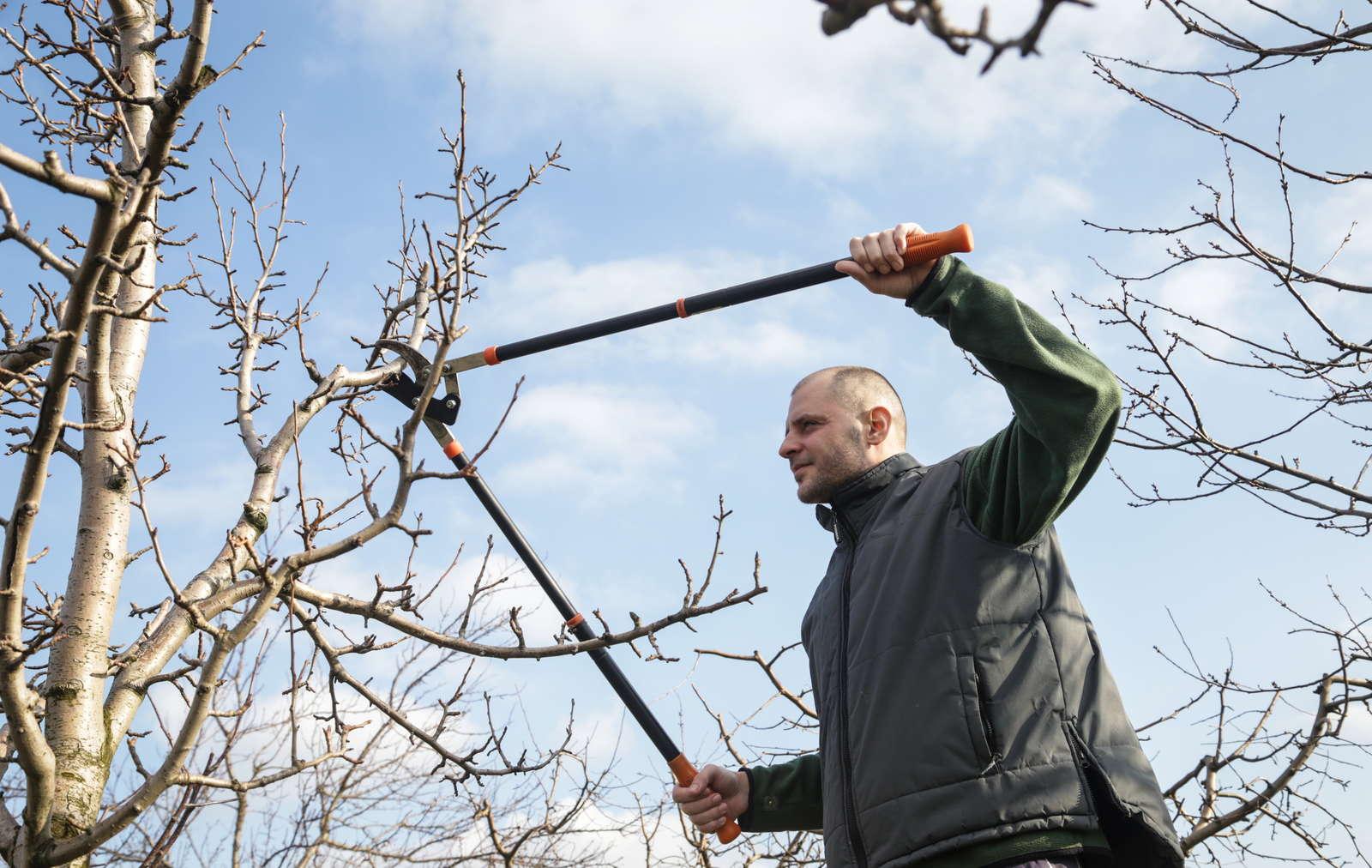 Fabelhaft Pflaumenbaum schneiden: Tipps vom Experten - Plantura @NT_18
