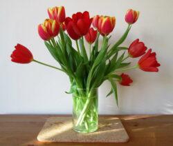 27 Tulpen Vase
