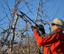 5 Apfelbaum Schneiden Winter