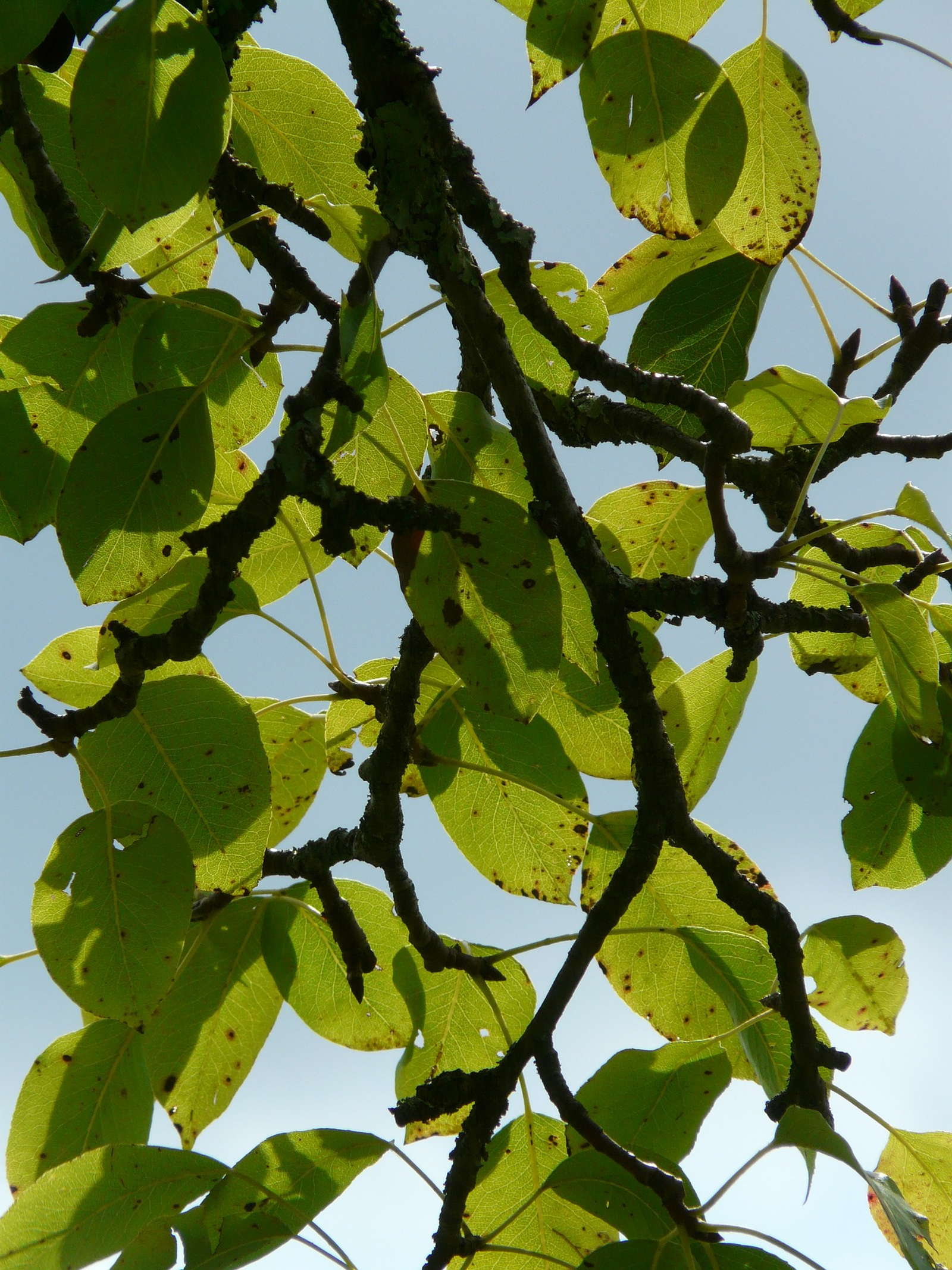 Obstbaume Richtig Schneiden Anleitung Vom Experten Plantura