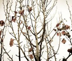 Birnbaum Herbst