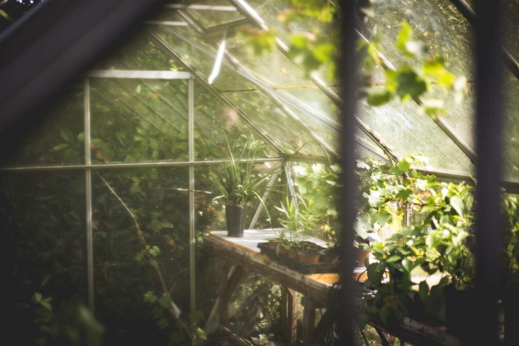 Gewächshaus mit Pflanzen
