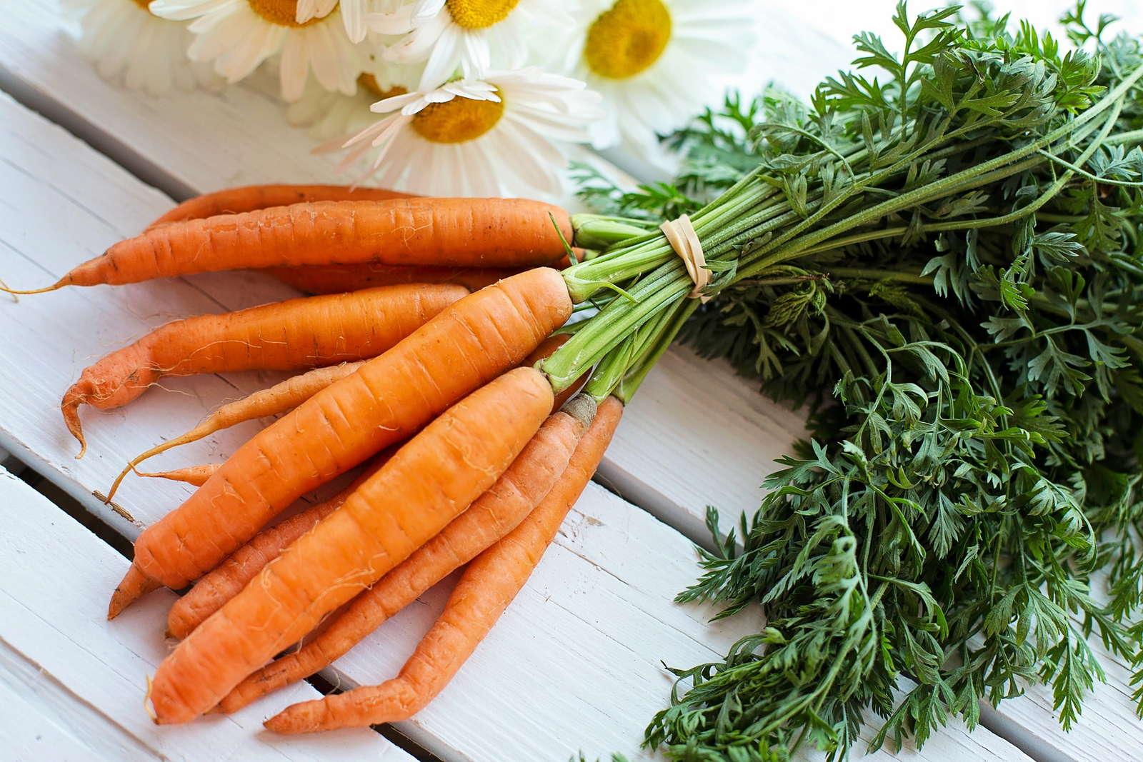 Lieblings Karotten pflanzen und anbauen: Experten-Tipps - Plantura &DS_81