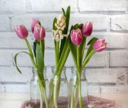 Tulpen Vase 2