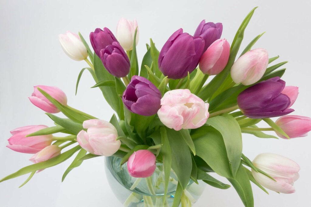 Tulpen Vase violette rosa weiße Blüten