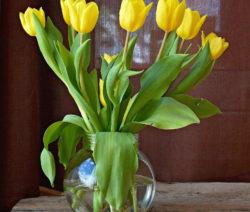Tulpen Vase 4