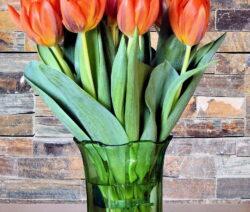 Tulpen Vase 5