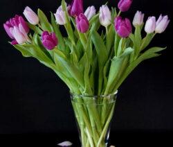Tulpen Vase 1