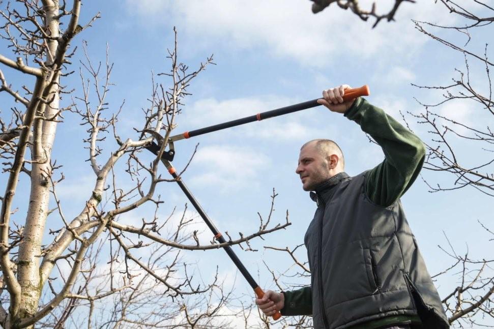 Mann schneidet Pflaumenbaum