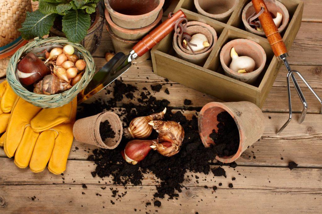 Materialien für das Pflanzen von Tulpen im Topf