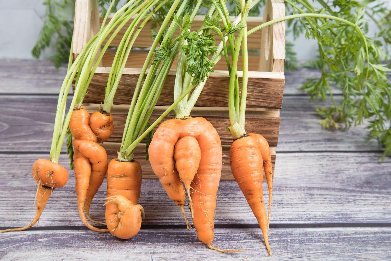Verformte Karotten