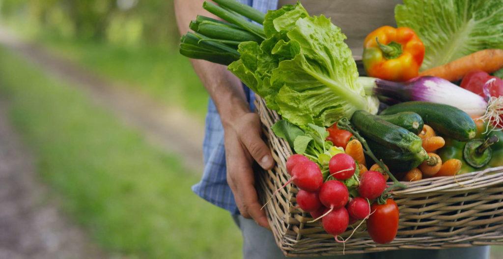 Weidenkorb mit Gemüse Ernte