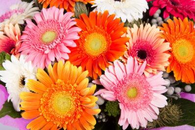 Blumen für den Muttertag: Die 5 Schönsten für Ihre Mama